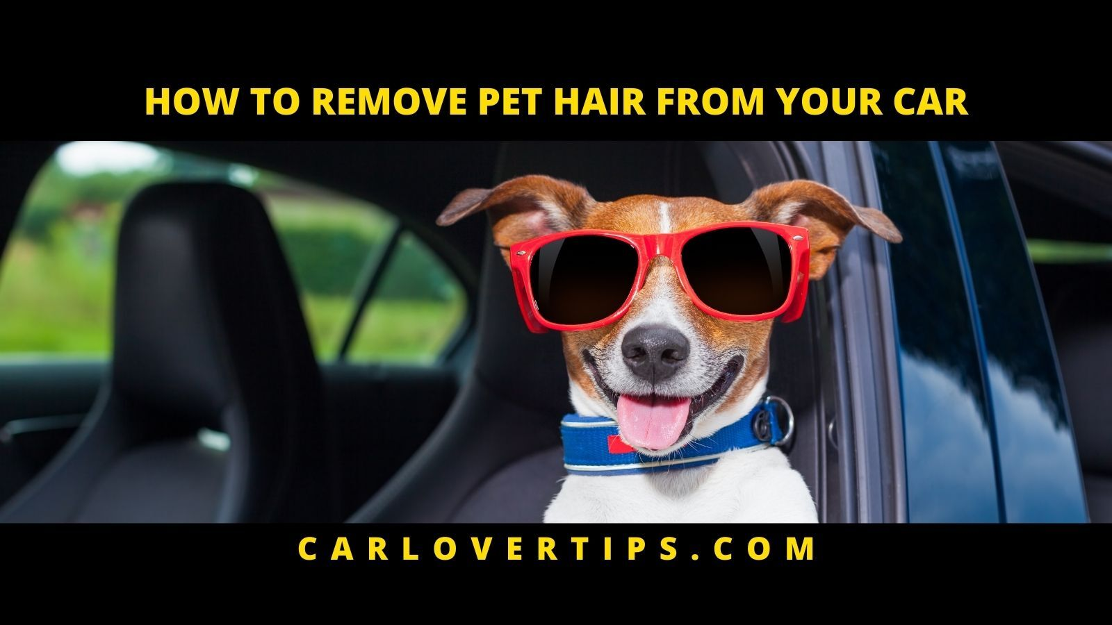HOW TO Remove Pet Hair From Your Car Lover Tips