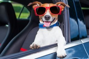 Easily Remove Pet Hair from Car